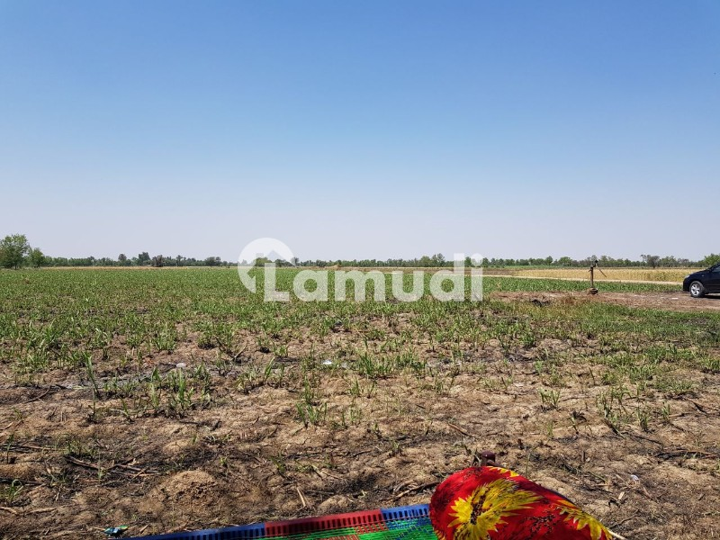 Dera Ismail Khan Agriculture Land Irrigated Laser Levelled Close To  CPEC - Others
