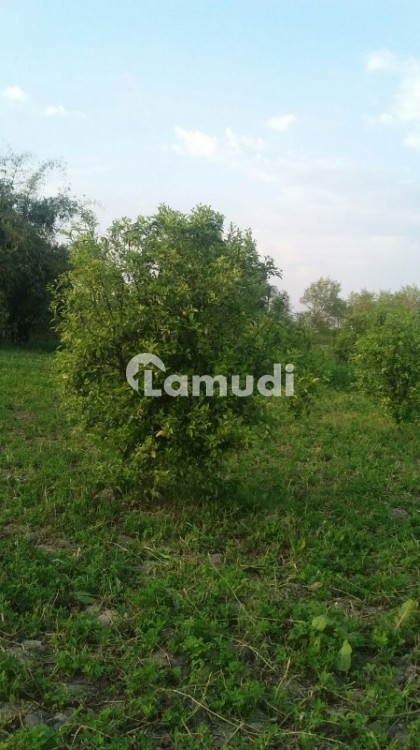 Agriculture Land Is Available  For Sale - Others