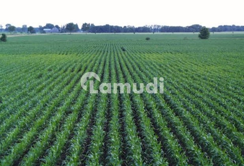 Agriculture Zameen - Others