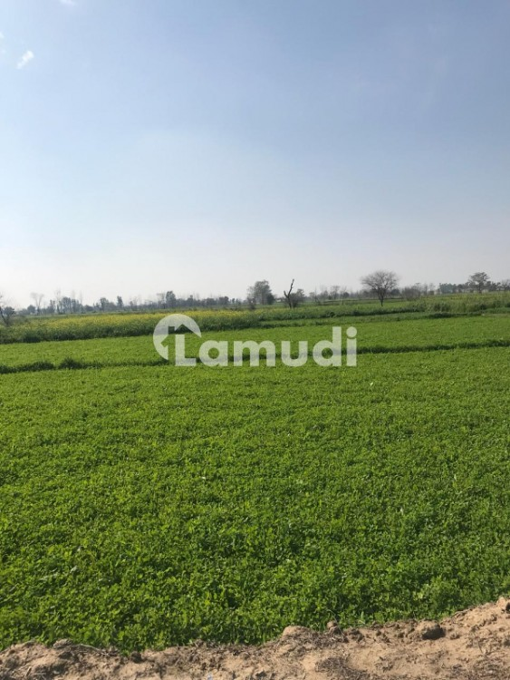 Agricultural Land Is Available For Sale - Ferozepur Road