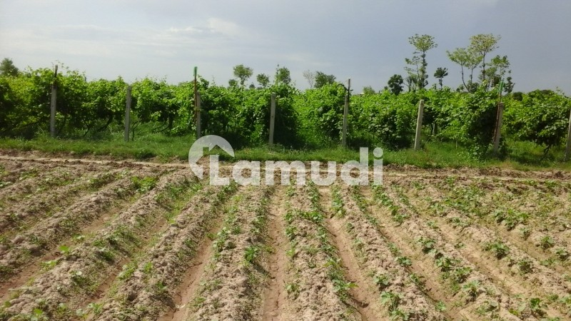 Land Is Available For Sale - Others