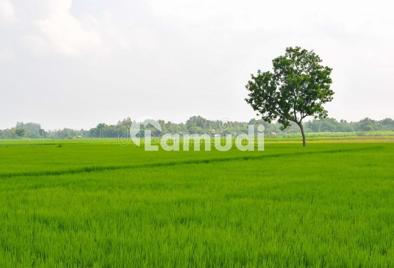 125 Kanal Agriculture Land For Sale - Others