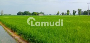 Centrally Located Agricultural Land In Hasilpur To Vehari Road Is Available For Sale