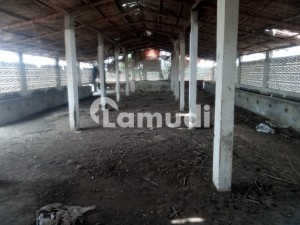 Cattle Shed Is Available For Rent