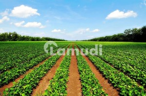 5.50 Acr Agricultural Land For Sale