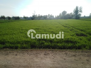 14 Kanal Agricultural Land For Sale Chak 36 Nb