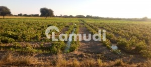 Agricultural Land Of 10350  Square Feet For Sale In Badin - Seerani Road