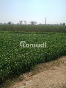 15 Acre Land Available For Sale In Pattoki