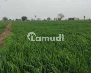 Agricultural Land For Sale Is Readily Available In Prime Location Of Bahawalpur Yazman Road