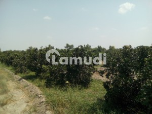 Best Options For Agricultural Land Is Available For Sale In Fatehpur