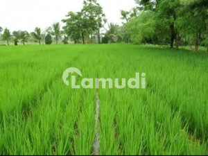 540000  Square Feet Agricultural Land In Chinioti Road For Sale At Good Location