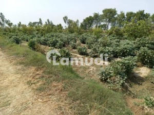 Plot For Sale At Sector C