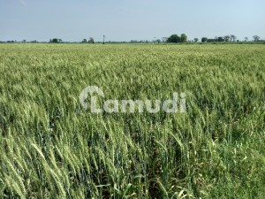 Get In Touch Now To Buy A Agricultural Land In Allama Iqbal Town