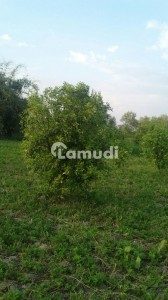 Agriculture Land Is Available  For Sale