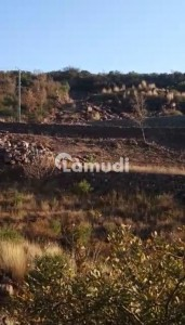 6 Kanal Land Is Available For Sale