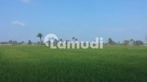 60 Acre Agricultural Land Is Available For Sale In Main Narowal Road