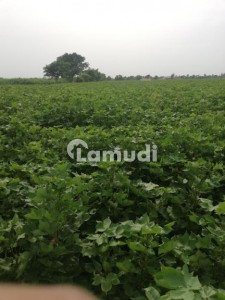 23 Acres Agricultural Land Is Available For Sale