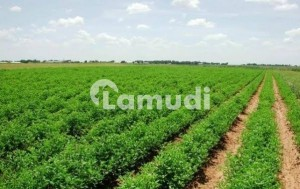 Agricultural Land For Sale Each And Everything Full Document