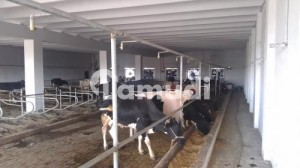 Environment Controlled Shed For Imported Cows For Rent