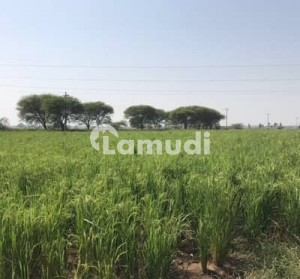 20 Kanal Agriculture Land for Sale in Takia Narowal