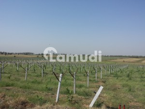 Developed Grapes  Orange Agro Farmhouse Sale Near Tarbela Ghazi Motorway Interchange