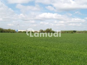 17 Acre Agriculture Land Available For Sale At Jarranwala Road