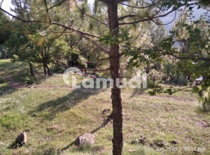 Residential Plots Are Available For Sale In Murree Mughlabad
