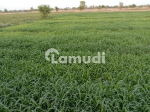 7 Acre Agriculture Land For Sale In Chak No 42 43 TDA  Bhakkar