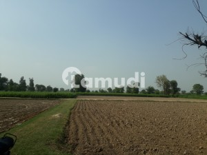 3 Acre ( Killa) Agricultural Land For Sale In Bedian Village Near Brb Canal