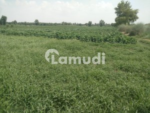 Agriculture Land Is Available For Sale On Chak 104/1 Rahim Yar Khan