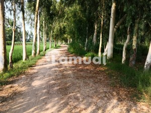Green Land For Sale